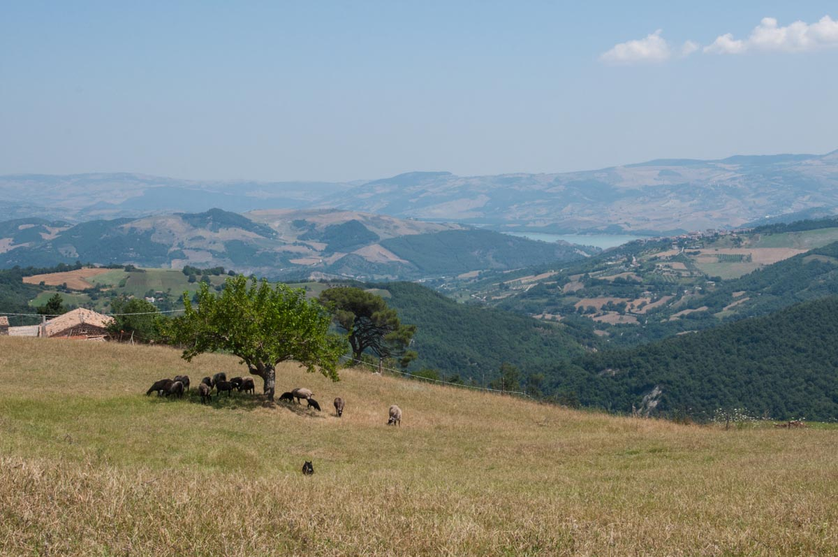 Montagna Molise Pecore